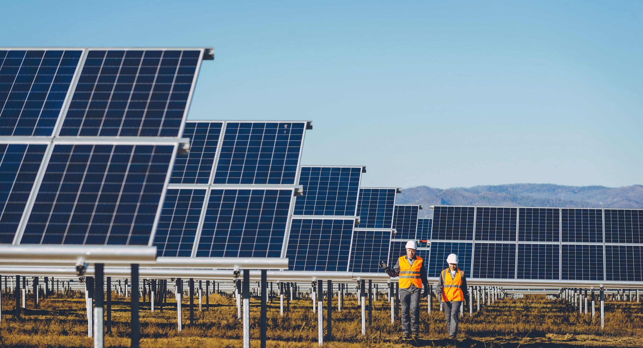 Solar Farm with People Walking